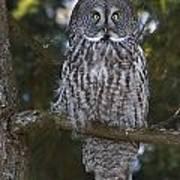 Great Owl Eyes Art Print