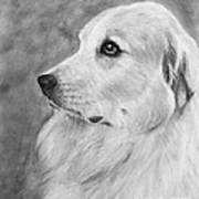 Great Pyrenees In Profile Drawing Art Print