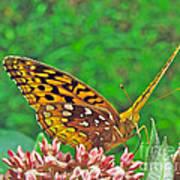 Great Spangled Fritillary Butterfly - Speyeria Cybele Art Print