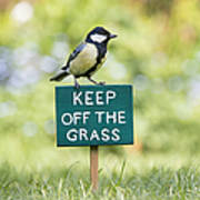 Great Tit On A Keep Off The Grass Sign Art Print by Tim Gainey