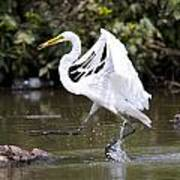 Great White Egret And Turtle Friends1 Art Print