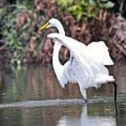 Great White Egret Fishing 1 Art Print