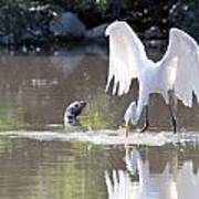 Great White Egret Fishing Sequence 4 Art Print