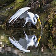 Great White Heron Fishing Art Print