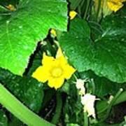 Green And Yellow Art Print
