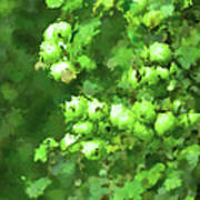 Green Apple On A Branch Art Print