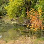 Green Ash In Autumn Foliage Art Print