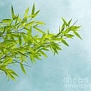 Green Bamboo Art Print by Priska Wettstein