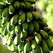 Green Bananas Art Print