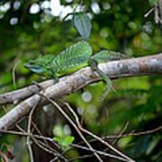 Green Basilisk Lizard Art Print