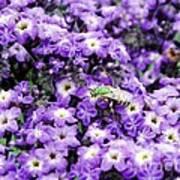 Green Bee Tiny Pollinator Art Print