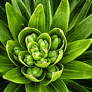 Green Buds Art Print