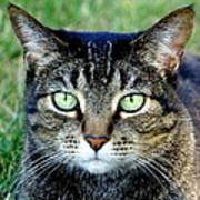 Green Cat Eyes In Summer Grass Art Print
