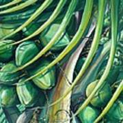 Green Coconuts  2  Art Print