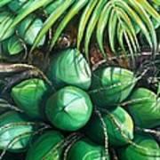 Green Coconuts  3  Sold Art Print