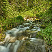Green Colors And A Stream Hdr Art Print