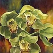 Green Cymbidium Orchids Art Print