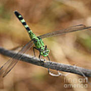 Green Dragonfly Square Art Print