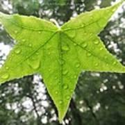 Green Droplets Art Print