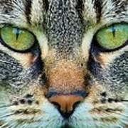 Green Eyez Art Print