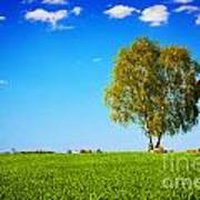 Green Field Landscape With A Single Tree Art Print