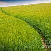 Green Field Art Print
