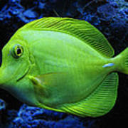 Green Fish Print by Wendy J St Christopher