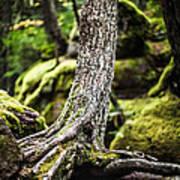 Green Forest Print by Aaron Aldrich