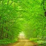 Green Forest Tunnel Art Print
