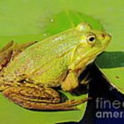 Green Frog 2 Art Print