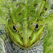 Green Frog Art Print by Matthias Hauser
