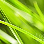 Green Grass Abstract Art Print