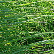 Green Grass Growing Art Print