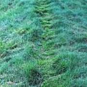 Green Grass Pathway. Art Print