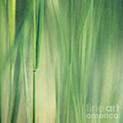 Green Grass Art Print