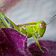Green Grasshopper I Art Print