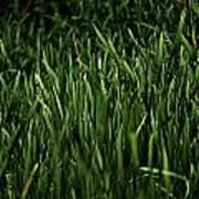 Green Green Grass ... Art Print
