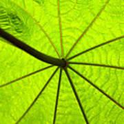Green Growth Art Print