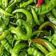Green Hot Peppers Art Print