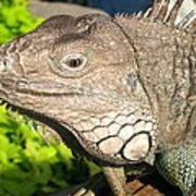 Green Iguana Face Art Print