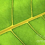 Green Leaf Close Up Art Print