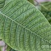 Green Leaf Macro Art Print