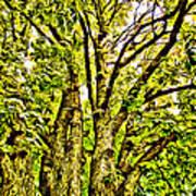 Green Leafy Trees Art Print