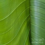 Green Leaves Series  6 Art Print