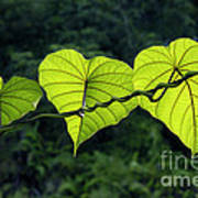 Green Leaves Art Print by William Voon