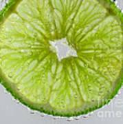 Green Lime In Tonic Water Art Print
