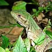 Green Lizard Close-up Art Print