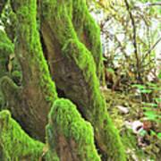 Green Moss Art Print
