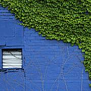 green on blue IMG 0964 Art Print