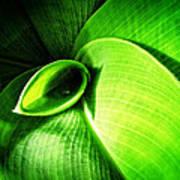 Green Paradise - Leaves By Sharon Cummings Art Print